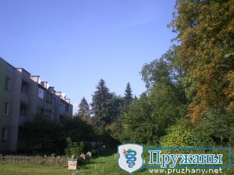 """Как сейчас выглядит """"Сквер Рекутя"""" в Ружанах, который стал памятником природы местного значения?"""