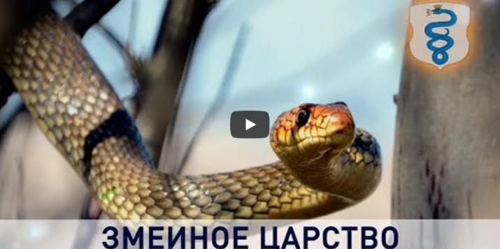 На гербе Пружан изображена змея, но разводители неядовых змей вынуждены уехать с Пружанщины. Видео.