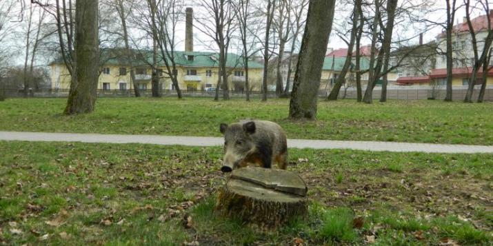 """Пружанскі палацык пажартаваў на першае красавіка: """"Дзік збег з лесу і носіцца па пружанскаму парку"""""""