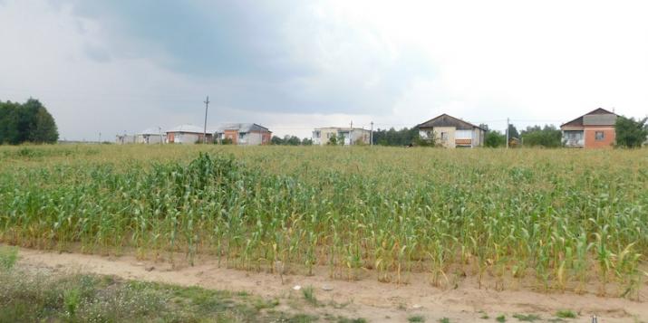 В Пружанском районе вблизи кукурузного поля обнаружены костные останки человека