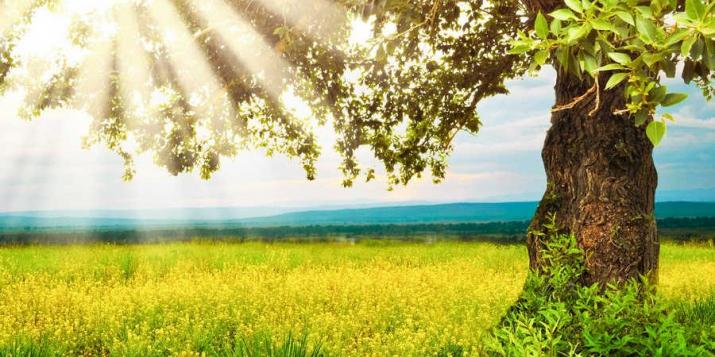 Завтра(вторник, 26 мая) в Брестскую область приходит лето