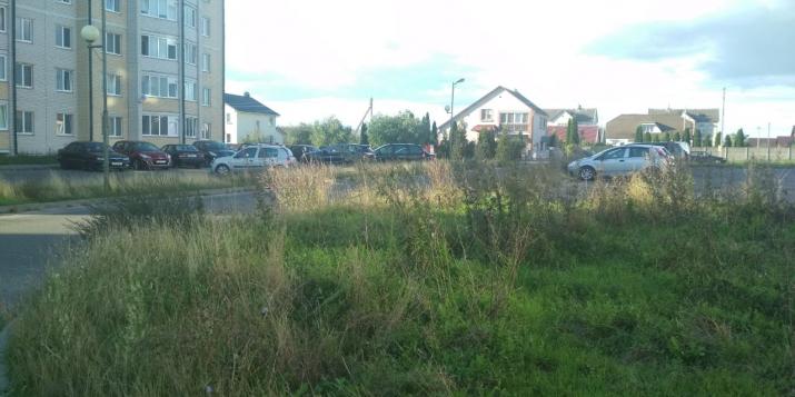 Почему на улице Рокоссовского в Пружанах растёт полынь по пояс и её никто не косит?