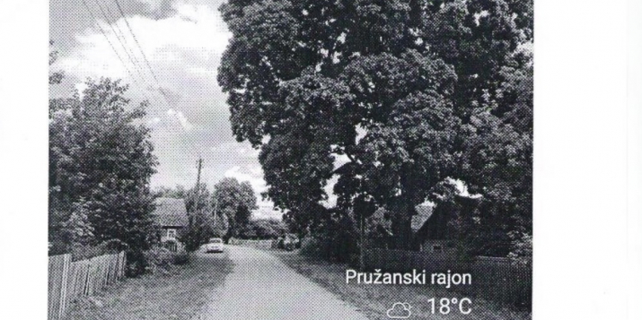 Проводится запрос ценовых предложений на вырубку 93 деревьев в Пружанском районе