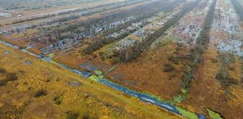 Болото Дикий Никор в Пружанском районе преображается и требует дополнительных плотин. Видео