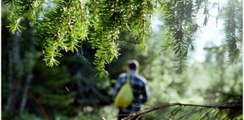 Во всех районах Брестской области снят запрет на посещение лесов