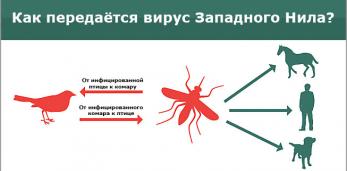 40лет назад в БССР произошла вспышка заболевания лихорадкой западного Нила, в т.ч. в Пружанском р-не