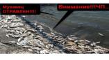 ЧП-Мухавец,Пружаны,отравленная река!!! ЧАСТЬ 1-я