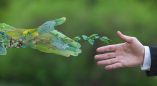 Предложи экологическую программу в Беловежской пуще. Билеты в Брест, проживание и питание бесплатно.
