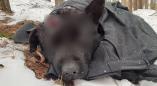 В Пружанах ищут живодёра, стрелявшего в кота, в Ружанах - бившего собаку о дерево. 18+