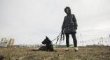 Хотя сообщалось, что удалось выйти на след живодёра из Ружан, его так и не нашли. Как живёт пёс-фото