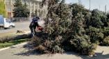 Выдано разрешение на удаление 7 ёлок возле ЗАГСа и 8 ёлок возле Пружанского райисполкома