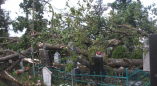 Последствия бури 1 июля 2019г. на православном кладбище города Пружаны. Фоторепортаж PRUZHANY.NET