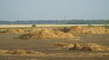 В Пружанском районе от урагана сильно пострадали посевы льна, рапса, тритикале и ячменя