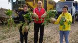 Брестская область: самая высокая урожайность сахарной свеклы в Пружанском районе