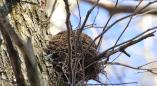 Крупный штраф грозит за уничтожение птичьих гнезд, обрезку деревьев с гнездами с 16 февраля