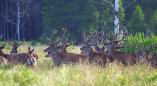 В Беловежской пуще насчитали 604 зубра, 2650 оленей и ещё много кого. Читаем!