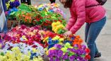 Искусственные цветы. Зачем мы сами устраиваем в местах массового погребения «пластиковый Чернобыль»?