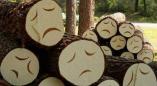 К разрешениям на вырубку дубов в Ровбицке, ясеней на ул.Пионерской в Пружанах добавились Стойлы