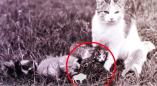 Фотофакт: в Беловежской пуще кошка вскармливала и котят и зайчонка