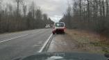 Фотофакт: в Пружанском районе рухнуло дерево и перегородило трассу