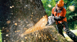 Пружанский райисполком о выдаче разрешения на удаление 30 сосен, 2 елей, 12 берёз, 1 ивы, 9 ольх