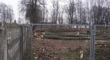 Фоторепортаж: на улице Октябрьской в Пружанах(возле старой больницы) спилили очень много деревьев