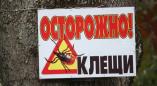 В Брестской области наступил «сезон охоты» у клещей. Как избежать их укусов?