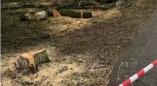 Фоторепортаж: в Пружанах пилят деревья, на газоне - следы техники. Но есть ли на это разрешение?