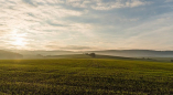Прокуратура выявила нарушения при использовании сельскохозяйственных земель в Пружанском районе
