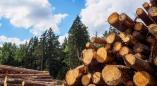 Пружанский райисполком разрешением №9 от13.09.2021: спилить 866 сосен(и не только) без компенсации