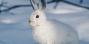 За охоту на зайца запрещенным способом на территории Беловежской пущи будут судить жителя Шерешево