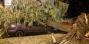 Ночью в Бресте дерево рухнуло на припаркованный автомобиль. Пошаговый алгоритм, как возместить ущерб